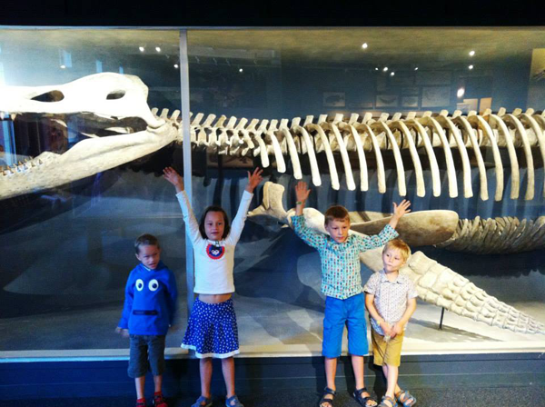 walvis_skelet